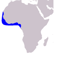 Cetacea range map Atlantic Humpback Dolphin.PNG