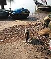Chó ở Cát Sơn, Tết năm 2018 (10).jpg