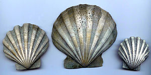 Chesapecten jeffersonius - Chesapecten jeffersonius (exterior of shell)