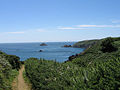 Cliff Path South-east of La Coupee - geograph.ci - 45.jpg