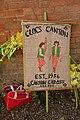 Clogs Canton.jpg