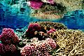 Colorful underwater landscape of a coral reef.jpg