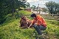 Con Korova (9300004567).jpg