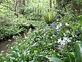 Cornish woodland flora - geograph.org.uk - 430725.jpg
