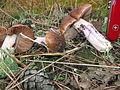 Cortinarius elatior Rossdorf GedSperber.jpg
