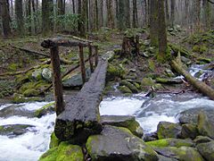 Cosby-creek-footbridge-gsmnp1.jpg