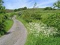 Country Lanes - geograph.org.uk - 172636.jpg