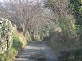 Country lane - geograph.org.uk - 712211.jpg