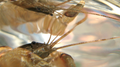 Crayfish with surface reflection (5788619635).png