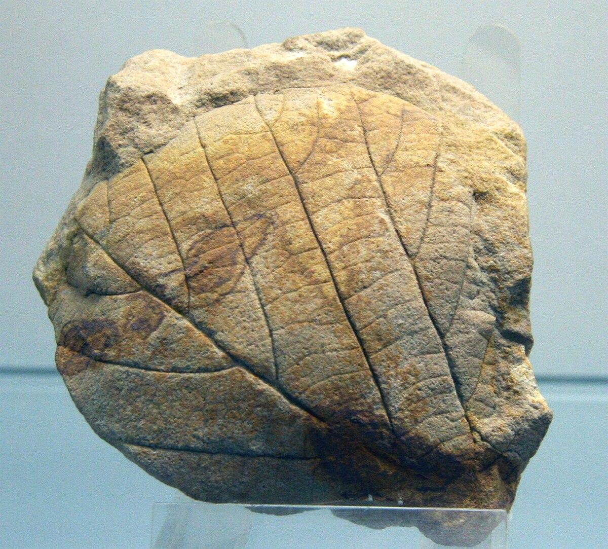 phanerozoicdevonian period wikiversity