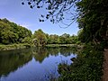 Creswell Gorge, Creswell Craggs, Notts (130).jpg