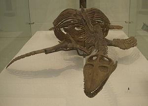 Cryptoclidus - Skeleton of Cryptoclidus oxoniensis (AMNH 995)