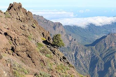 Cumbres de La Palma.jpg