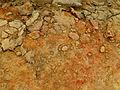 Dallol-Ethiopie (1).jpg