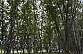 Dalnerechensky District, Primorsky Krai, Russia - panoramio.jpg