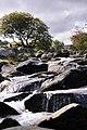 Dartmoor (5065425189).jpg