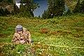 Dave Measures Berries work plants NPS Photo 2003 (17164106747).jpg