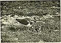 De jacht met de camera; (1909) (20658914210).jpg