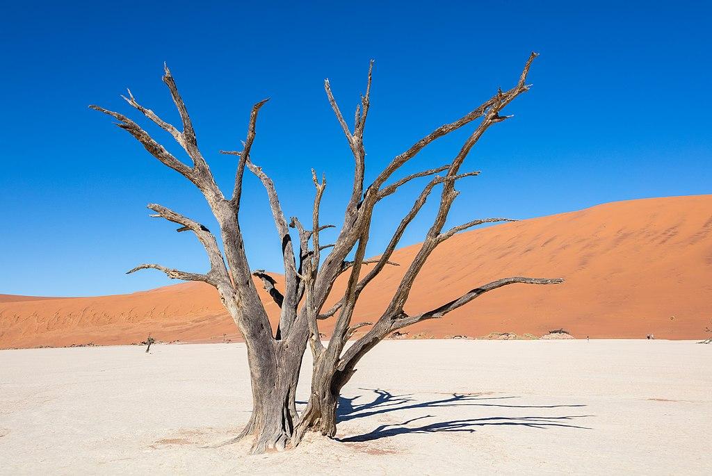 Dead Vlei, Sossusvlei, Namibia, 2018-08-06, DD 085.jpg
