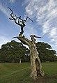 Dead tree, Beverley Westwood - geograph.org.uk - 2575120.jpg
