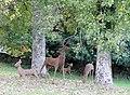 Deer sculptures, Canonteign Falls, nr Exeter (30479203244).jpg