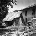 Del hiše, lopa, štala (hlev) in svinščak (svinjak), pri Miklavčevih, Gradišče 1955.jpg