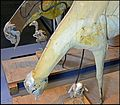 Demi-mannequin de taxidermie Muséum d'histoire naturelle de Lille GLAM2016 04.jpg