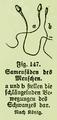 Die Frau als Hausärztin (1911) 147 Samenfäden des Menschen.png