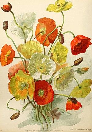 Die Gartenwelt (1897) (14771698042).jpg