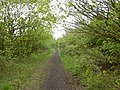 Disused railway line from Upton - geograph.org.uk - 1282652.jpg