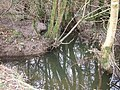 Dodscott Brook - geograph.org.uk - 657425.jpg