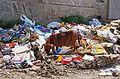 Dog and trash in Bucharest.jpg