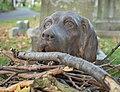 Dog in GWC (42542).jpg