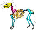 Dog skeleton hed and neck section with numbers.png