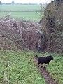 Dogs Paradise - geograph.org.uk - 299681.jpg