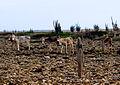 DonkeysBonaire.jpg