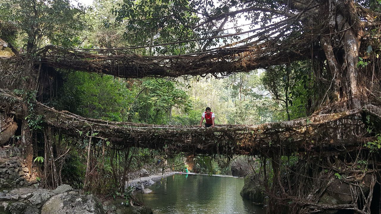 Double-Decker root bridge