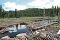 Dried-out beaver lake 01.jpg