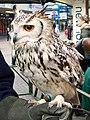 Eagle Owl (4124457637).jpg