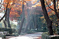 East Garden Edo Castle Tokyo photo D Ramey Logan.jpg