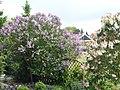 Eilensteg. Blumen - panoramio.jpg