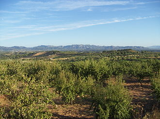 El Molar, Priorat - Cultivated fields near El Molar