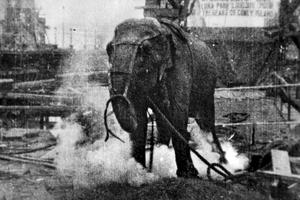 Electrocuting an Elephant - Image: Electrocuting an Elephant edison film 1903 frame shot