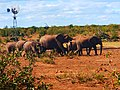 Elephants group walking away.jpg