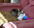 Ellie with her new mouse (20065937758).jpg