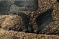 Enclave dans un granite.jpg