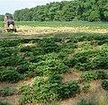 Erdbeerfelder - panoramio.jpg