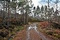 Estate road near Kinlochewe - geograph.org.uk - 1739231.jpg