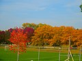 Fall in Warner Park - panoramio.jpg