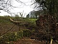 Fallen tree in Kilsture Forest - geograph.org.uk - 735923.jpg
